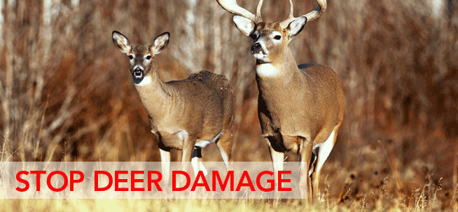 Stop Deer Damage with BuckStop Deer Fence by Eads Fence Company