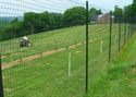 Picture for category Deer Fence Photo Galleries
