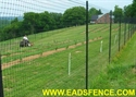 Picture of Deer Fence Photo Gallery